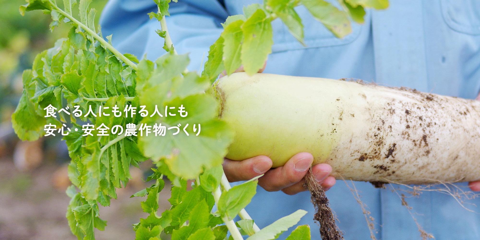 食べる人にも作る人にも安心・安全の農作物づくり SKファーム株式会社