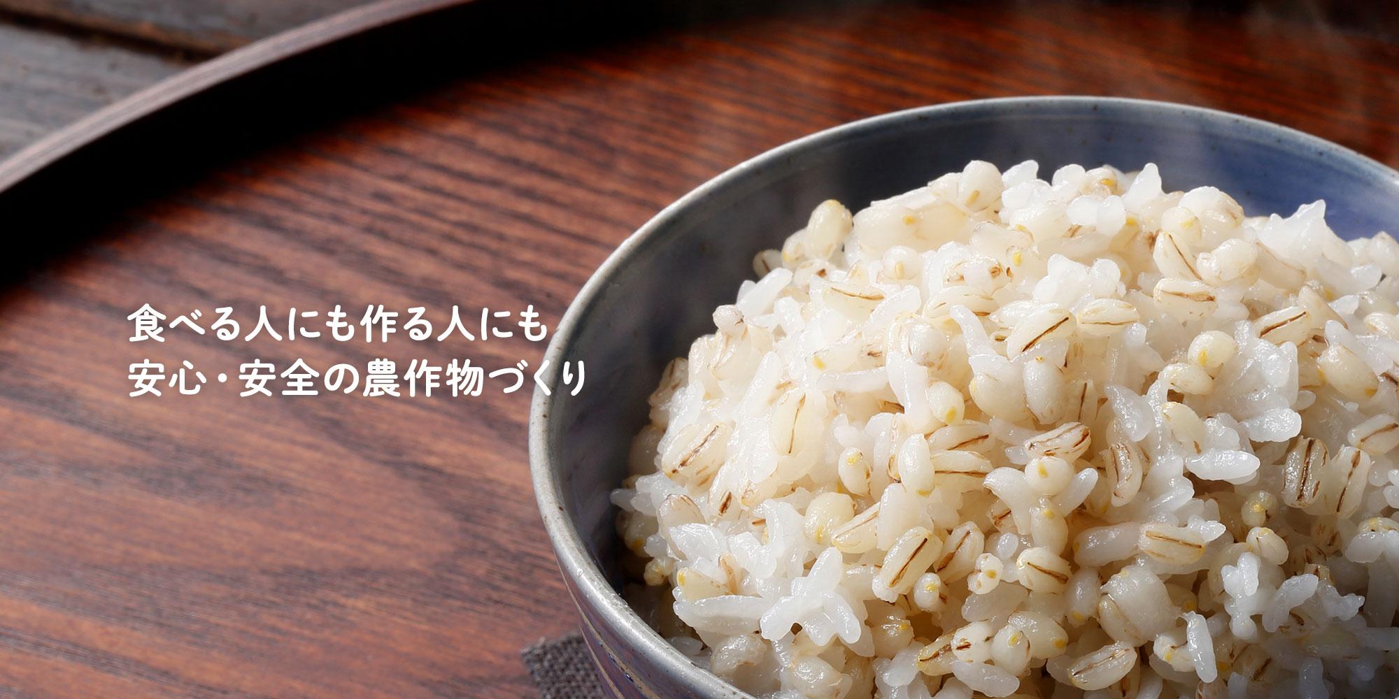 青森県産もち麦 もち性大麦新品種「はねうまもち」