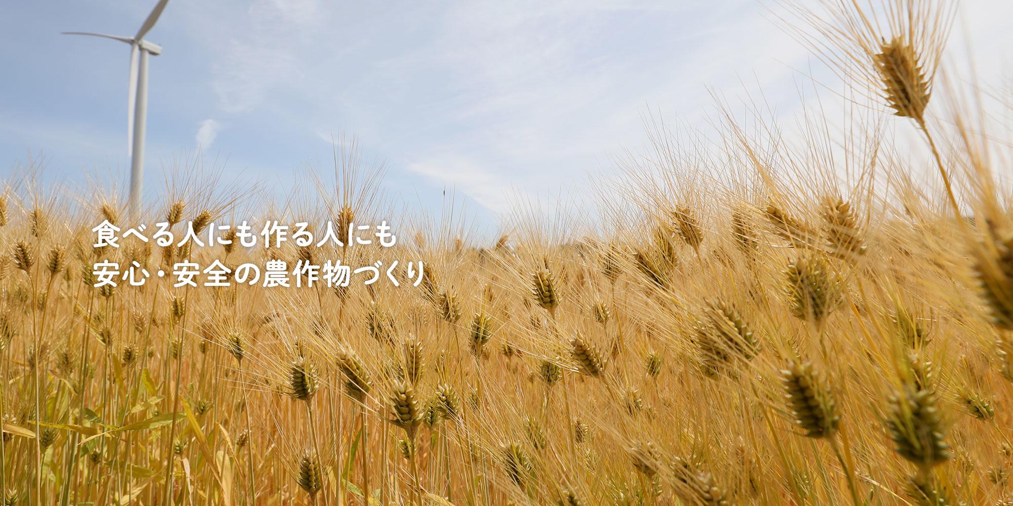 もち麦畑 つがる市